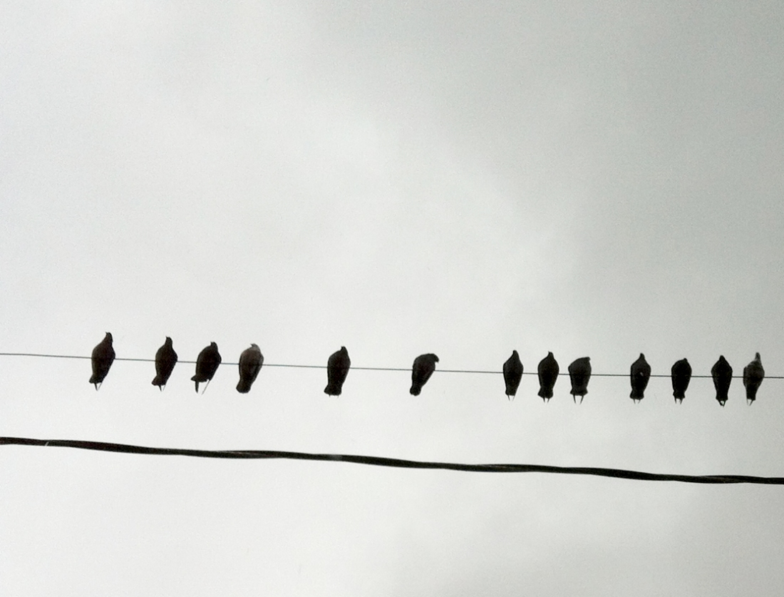 Pigeons sitting on a wire on a cloud day photograph taken by Jiali Ou of PBDen Graphics