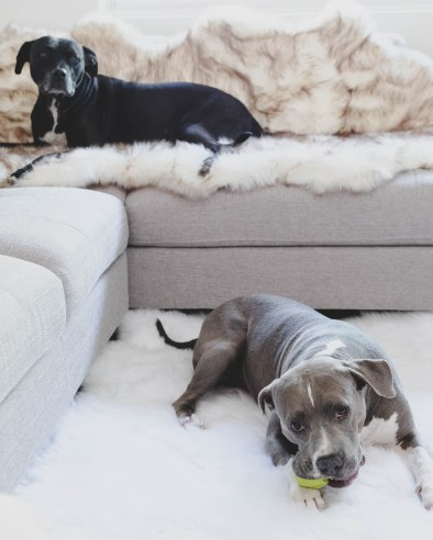 Shag dog beds by Animals Matter