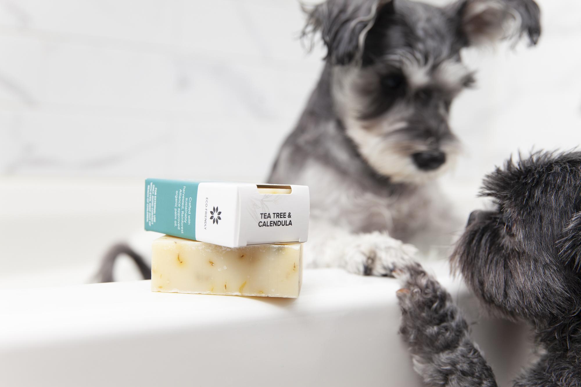 Puppies in a bath tub