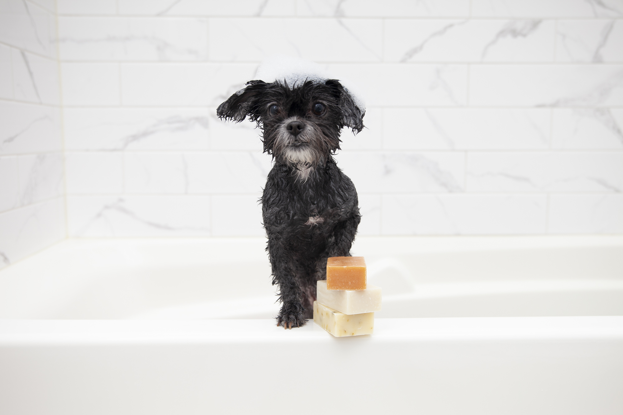 Puppy getting washed with Animals Matter Companion Soap on edge of the tub